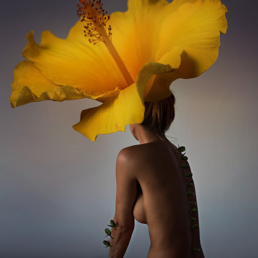 Burst into Bloom